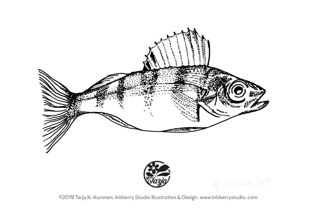 Yellow Perch Illustration