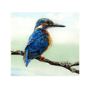 Kingfisher Jan 2020