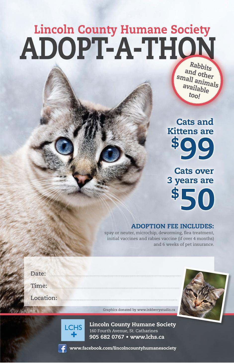 Cat Adoption Poster