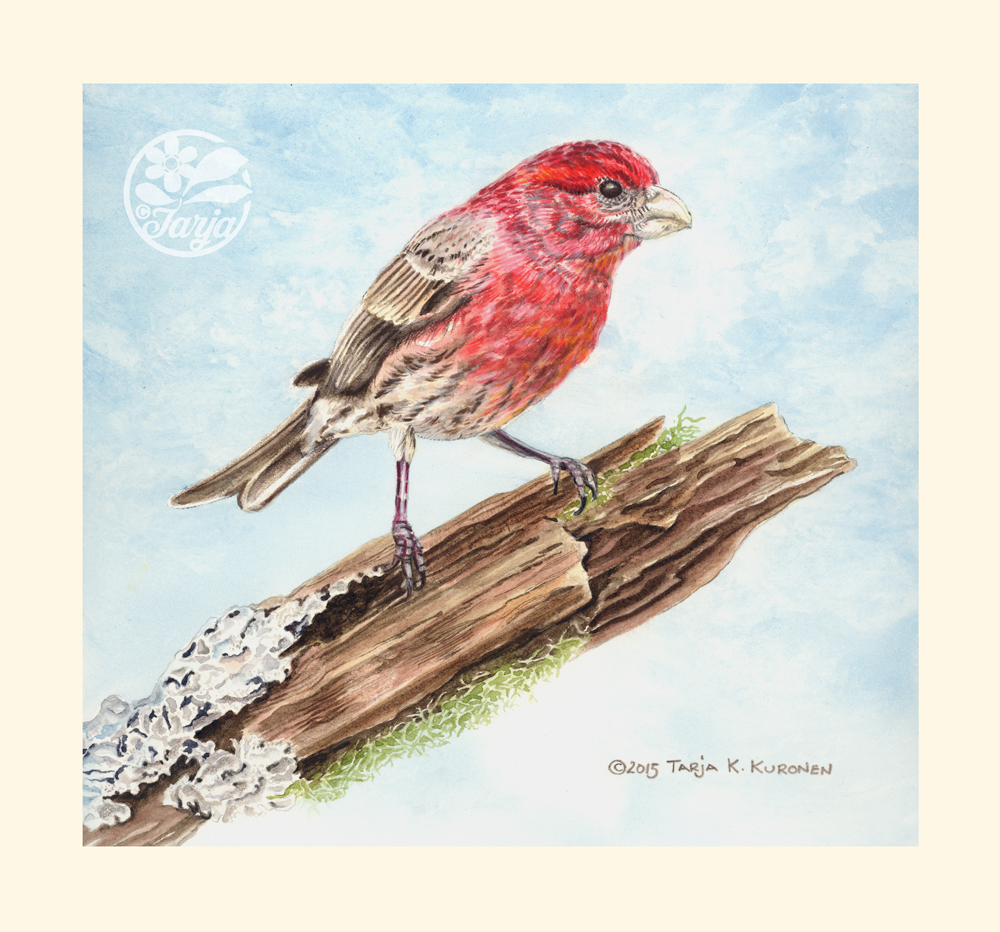 HouseFinch_Jun29_fb