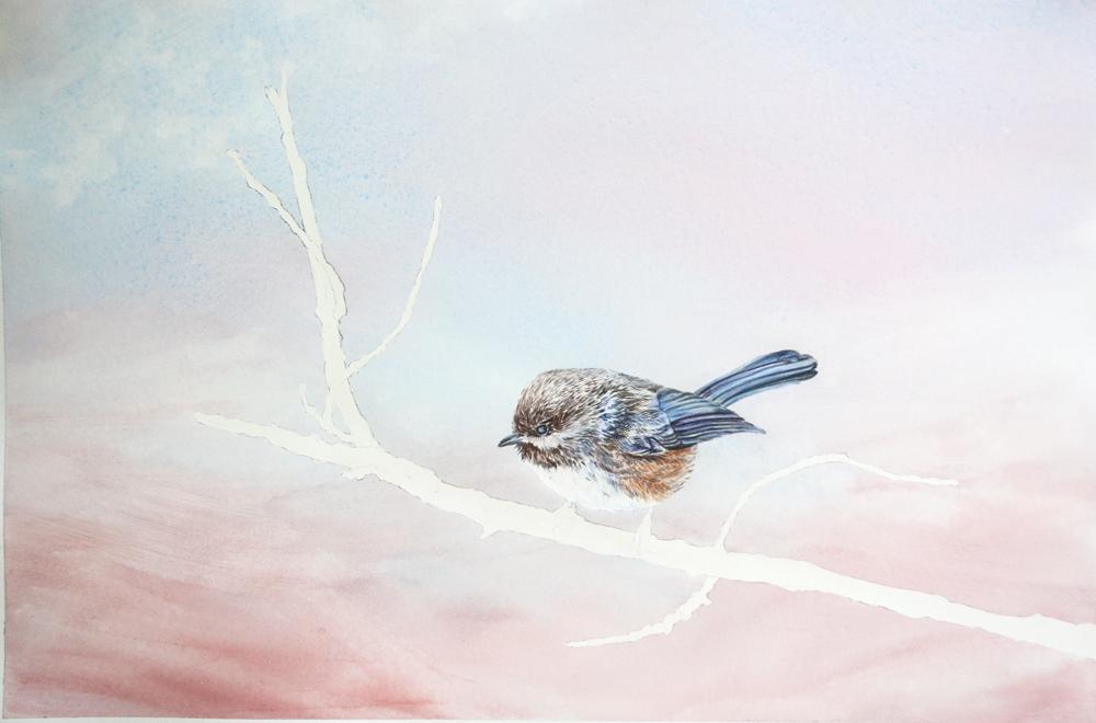 Boreal_Chickadee-May23-blog